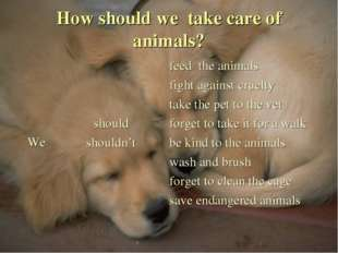 How should we take care of animals?