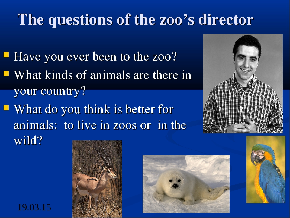 The questions of the zoo's director Have you ever been to the zoo? What kinds...