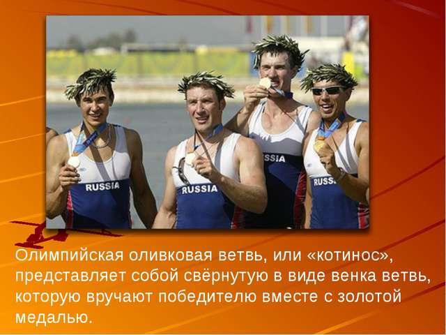 Олимпийская оливковая ветвь, или «котинос», представляет собой свёрнутую в ви...