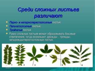 * * Среди сложных листьев различают Парно- и непарноперистосложные листья; Па