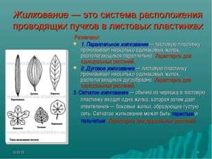 * * Жилкование — это система расположения проводящих пучков в листовых пласти