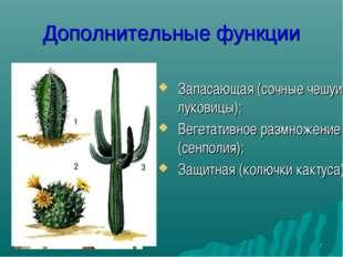* * Дополнительные функции Запасающая (сочные чешуи луковицы); Вегетативное р