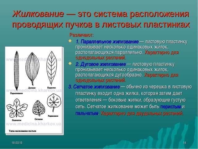 * * Жилкование — это система расположения проводящих пучков в листовых пласти...