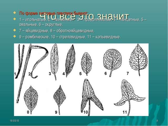 * * Что все это значит По форме листовые пластики бывают: 1 – игольчатые, 2 –...