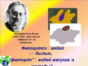 """Фагоцитоз қандай құбылыс, """"фагоцит"""" қандай жасушаға жатады? Мечников Илья Ил"""