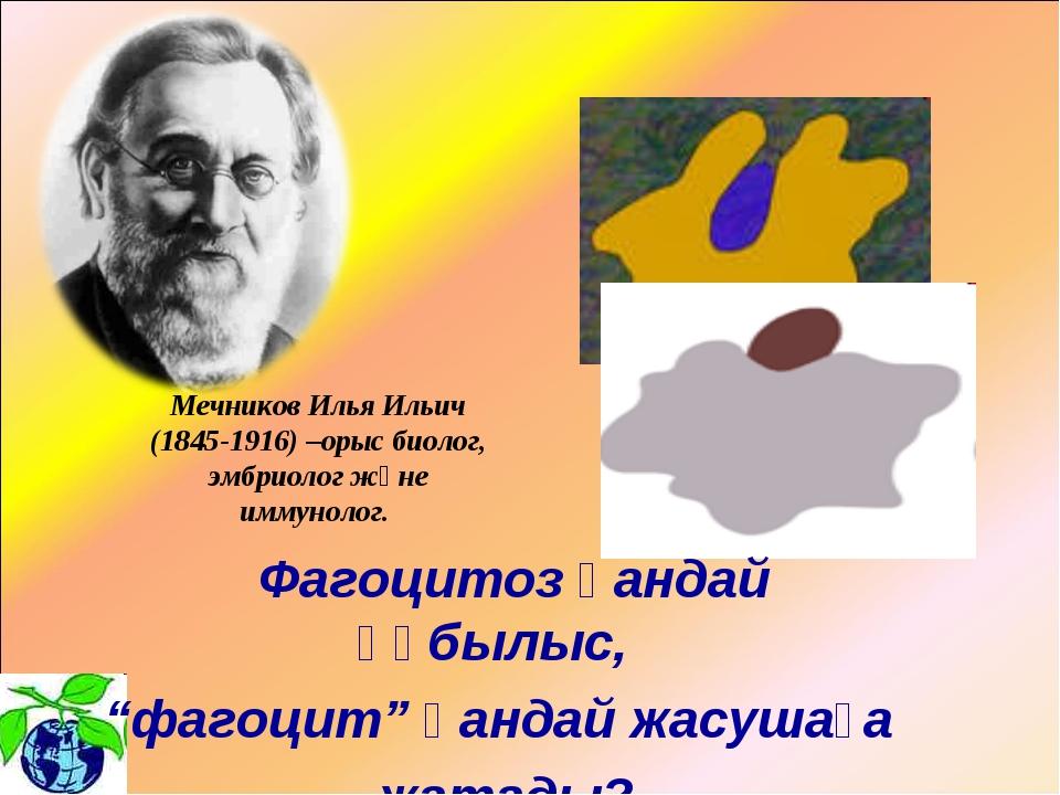 """Фагоцитоз қандай құбылыс, """"фагоцит"""" қандай жасушаға жатады? Мечников Илья Ил..."""