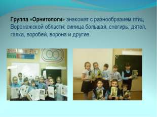 Группа «Орнитологи» знакомят с разнообразием птиц Воронежской области: синица