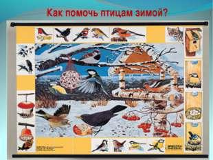 Как помочь птицам зимой? Покормите птиц зимой, пусть со всех концов К вам сле