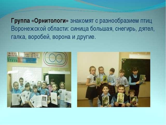 Группа «Орнитологи» знакомят с разнообразием птиц Воронежской области: синица...
