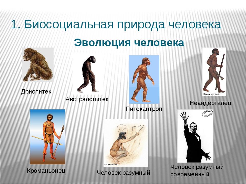 1. Биосоциальная природа человека Эволюция человека Дриопитек Австралопитек П...