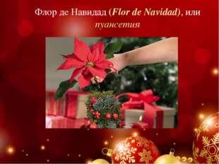 Флор де Навидад (Flor de Navidad), или пуансетия