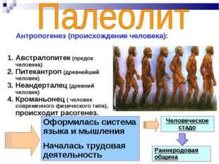 Австралопитек (предок человека) Питекантроп (древнейший человек) Неандерталец