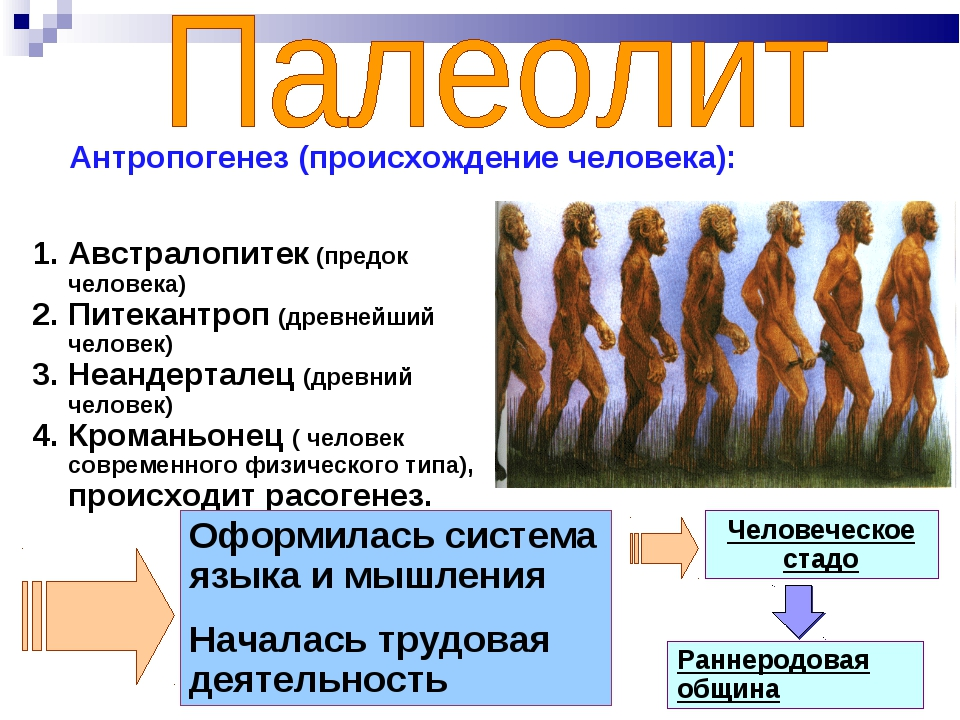 Австралопитек (предок человека) Питекантроп (древнейший человек) Неандерталец...