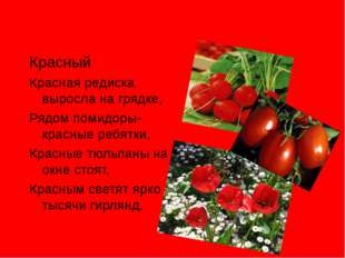 Красный Красная редиска выросла на грядке, Рядом помидоры-красные ребятки, К