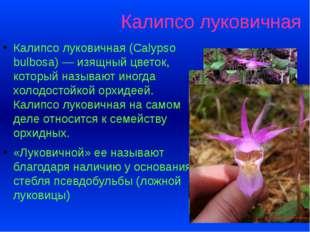 Калипсо луковичная Калипсо луковичная (Calypso bulbosa) — изящный цветок, кот