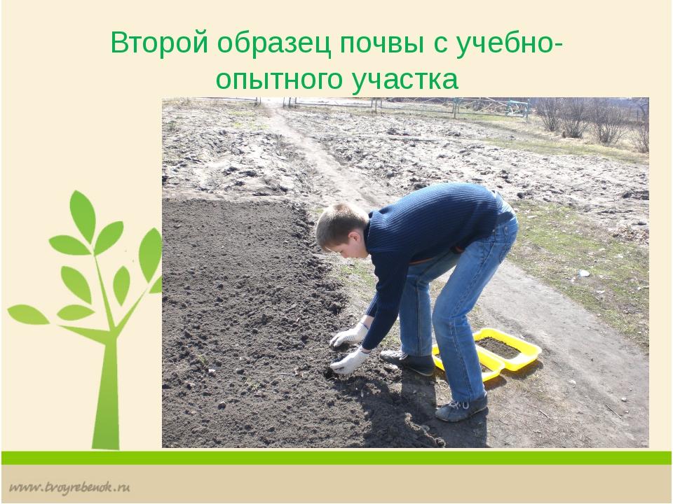 Второй образец почвы с учебно-опытного участка
