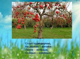Яблоня Стоит чудо-дерево, На дереве – мячики: Летом – зеленые, Осенью – рум
