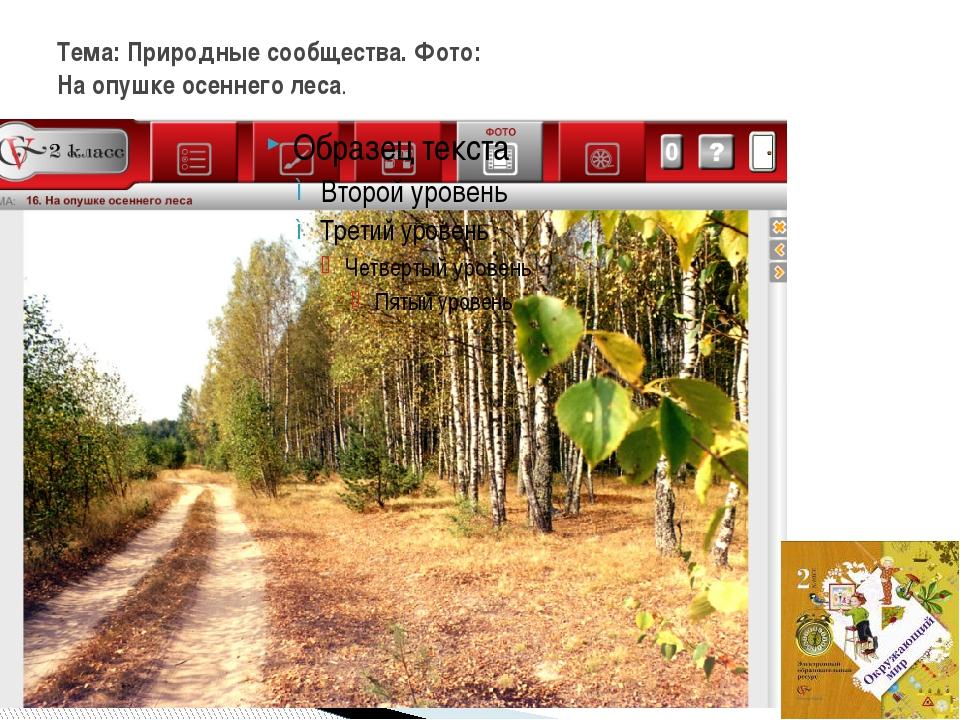 Тема: Природные сообщества. Фото: На опушке осеннего леса.