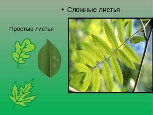 Сложные листья Простые листья
