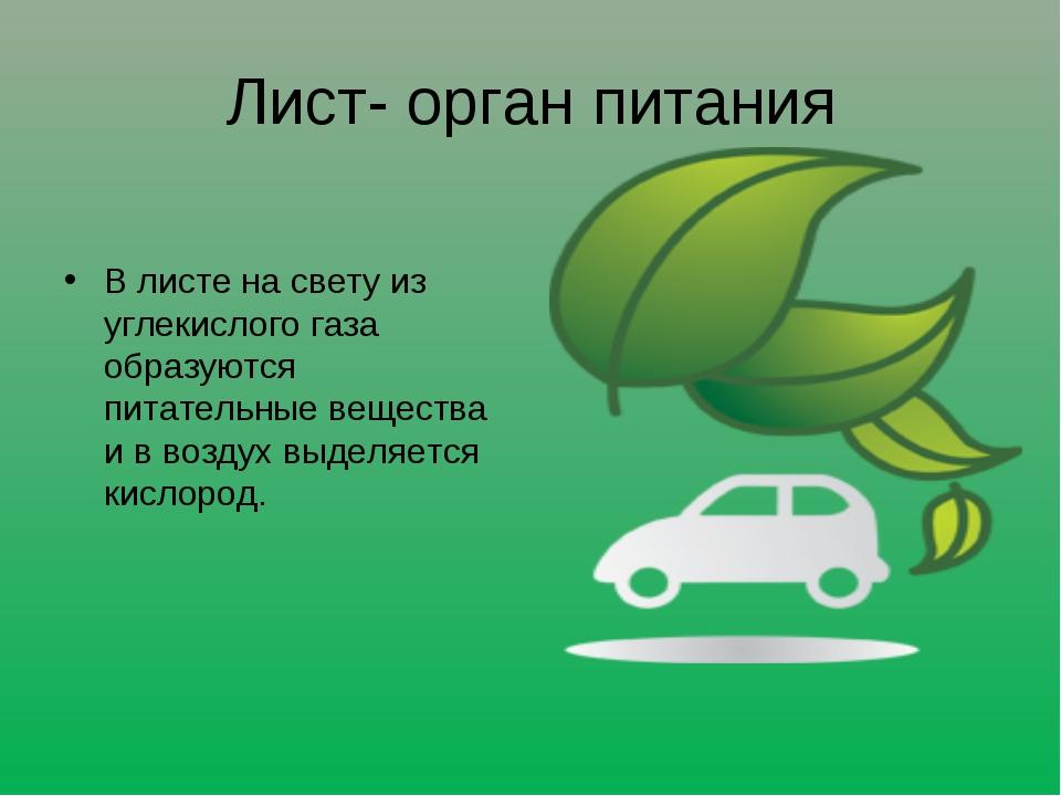 Лист- орган питания В листе на свету из углекислого газа образуются питательн...