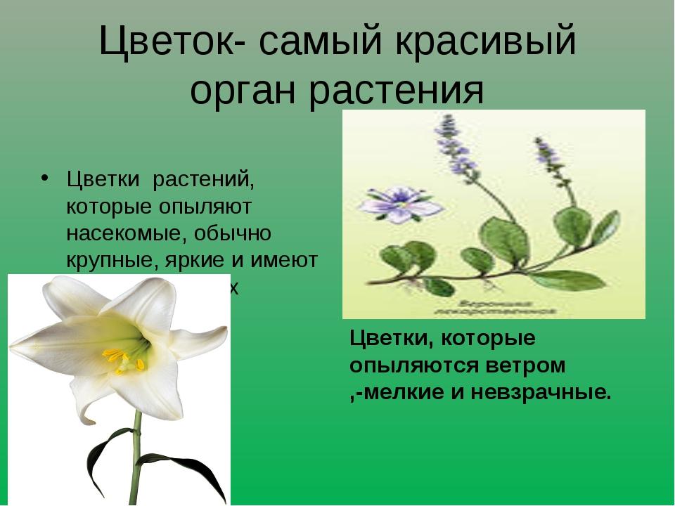 Цветок- самый красивый орган растения Цветки растений, которые опыляют насеко...
