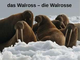 das Walross – die Walrosse