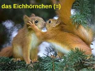 das Eichhörnchen (=)