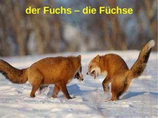 der Fuchs – die Füchse