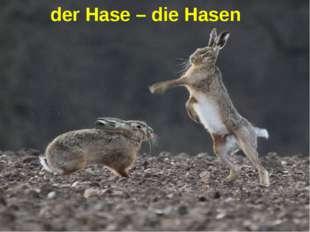 der Hase – die Hasen