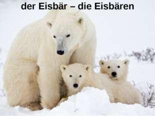 der Eisbär – die Eisbären