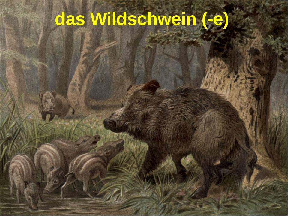 das Wildschwein (-e)