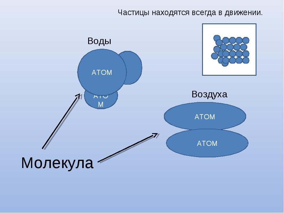 АТОМ АТОМ АТОМ АТОМ Молекула Воды Воздуха Частицы находятся всегда в движении.