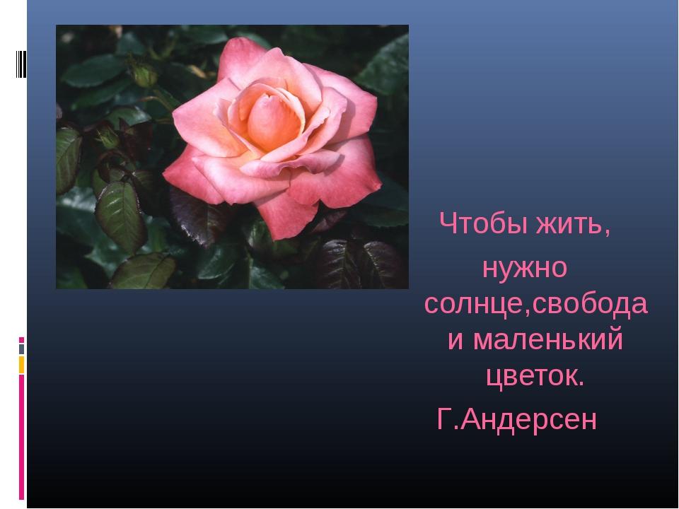 Чтобы жить, нужно солнце,свобода и маленький цветок. Г.Андерсен