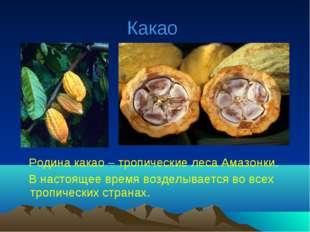 Какао Родина какао – тропические леса Амазонки. В настоящее время возделывает