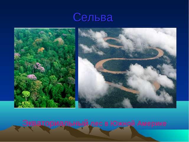 Сельва Экваториальный лес в Южной Америке