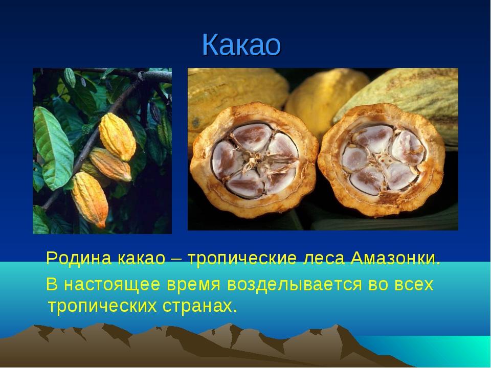 Какао Родина какао – тропические леса Амазонки. В настоящее время возделывает...