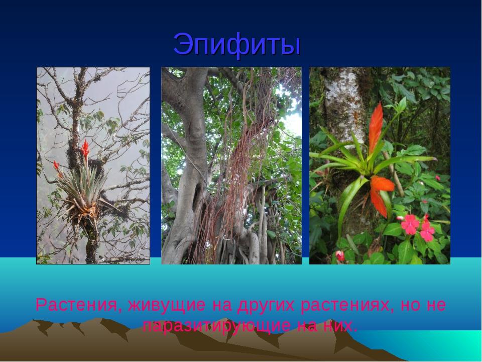Эпифиты Растения, живущие на других растениях, но не паразитирующие на них.