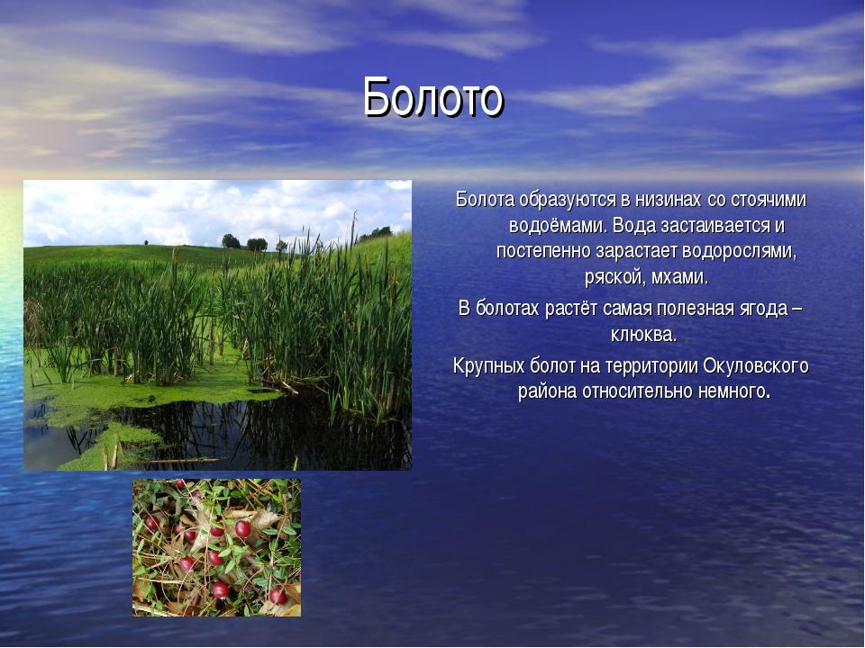 Болото Болота образуются в низинах со стоячими водоёмами. Вода застаивается и...