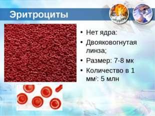 Эритроциты Нет ядра: Двояковогнутая линза; Размер: 7-8 мк Количество в 1 мм2: