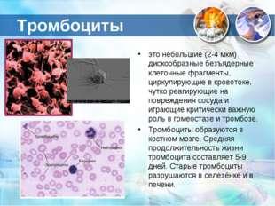Тромбоциты это небольшие (2-4 мкм) дискообразные безъядерные клеточные фрагме