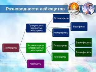 Разновидности лейкоцитов