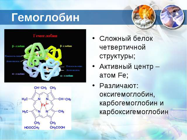 Гемоглобин Сложный белок четвертичной структуры; Активный центр – атом Fe; Ра...