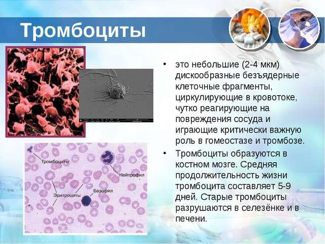 Тромбоциты это небольшие (2-4 мкм) дискообразные безъядерные клеточные фрагме...