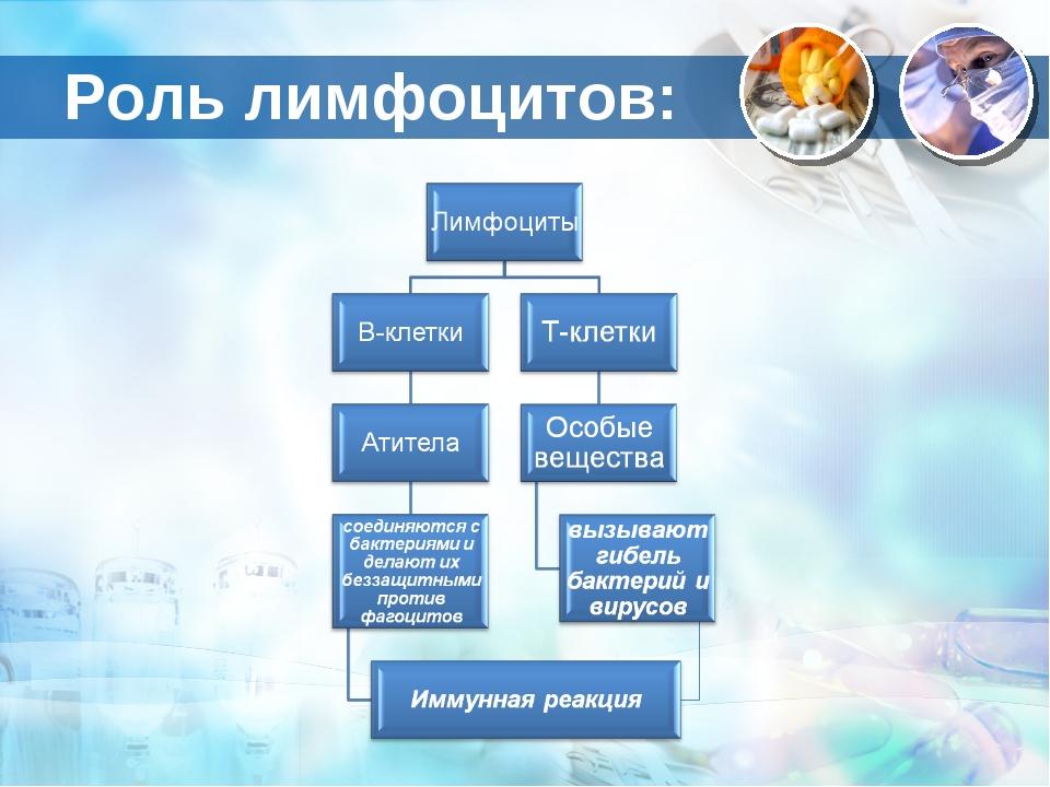 Роль лимфоцитов: