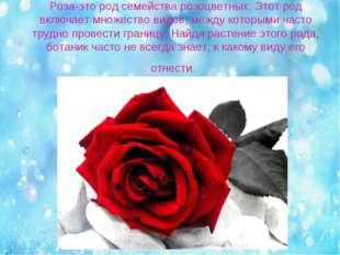 Роза-это род семейства розоцветных. Этот род включает множество видов, между