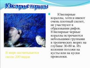 Ювелирные кораллы, хотя и имеют очень плотный скелет, не участвуют в о