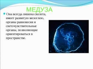 МЕДУЗА Она всегда лишена скелета, имеет развитую мезоглею, органы равновесия