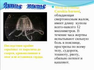 Медуза-убийца Carukia barnesi, обладающая смертоносным жалом, имеет длину куп