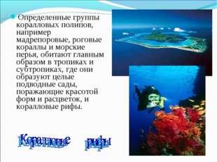 Определенные группы коралловых полипов, например мадрепоровые, роговые коралл