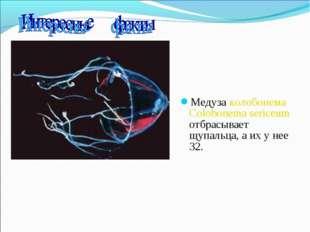 Медуза колобонема Colobonema sericeum отбрасывает щупальца, а их у нее 32.